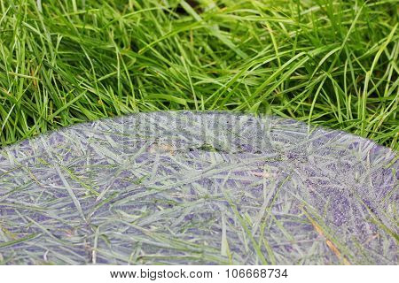 ice disk on the green grass