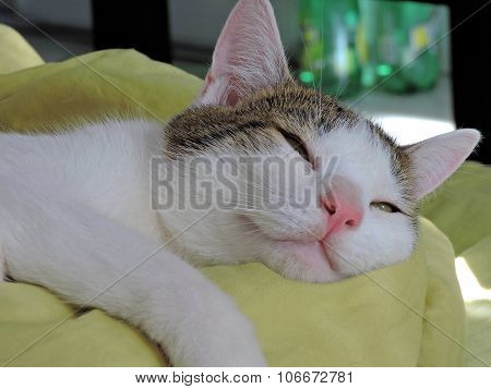 Nicest snoozing cat
