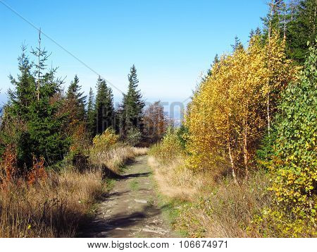 path in the nature