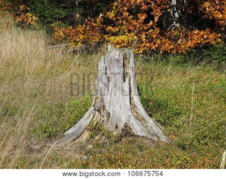 stump in sear grass