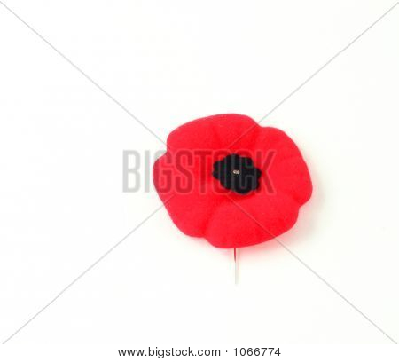 Remeberance Day Poppy