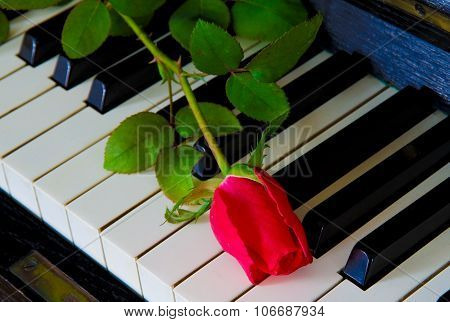 Red Rose On The Piano - Greeting Card