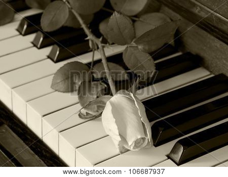 Condolence Card - Rose On Piano
