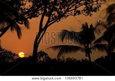 Silhouettes At Sunset
