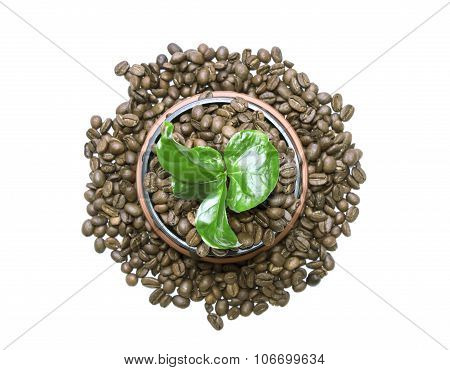 Young Green Sprout Of A Tree Growing Out Of The Coffee Beans Instead Of Ground In A Pot