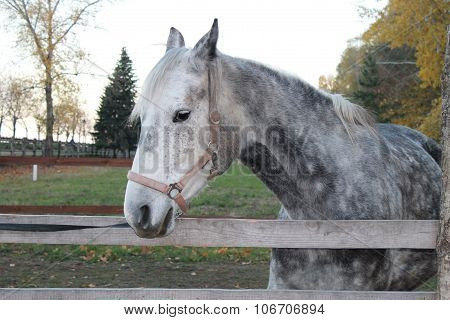 Portrait Of Beautiful Horse In Paddock