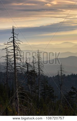 Lines Of The Smokies