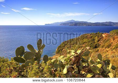 Elba Island, Cactus Indian Fig Opuntia, Coast View Capoliveri Tuscany, Italy.