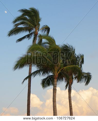 Palm trees and moon in the sky in Hawaii in the USA