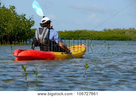 Man Kayaking In Florida Bay With Mangroves