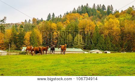 Horses in a meadow in Glen Valley