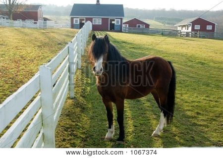 Pony On Farm