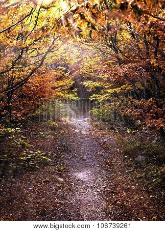 Pathway In The Autum Forest Illuminated By The Sun