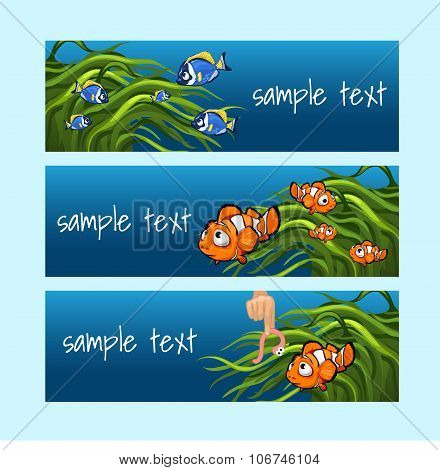 Clown fish among the algae on a blue background