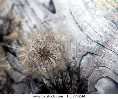 Fluffy blow ball - beautiful dandelion seeds