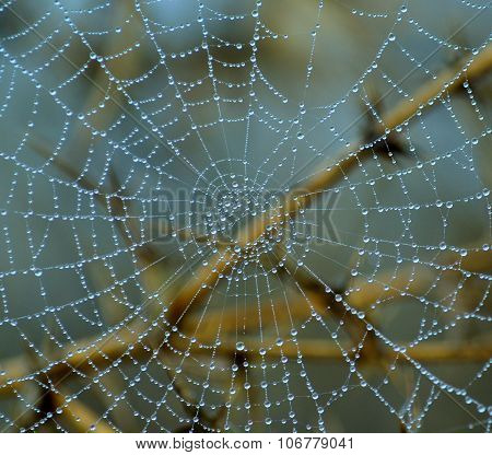 Tiny dewdrops on fine cobweb