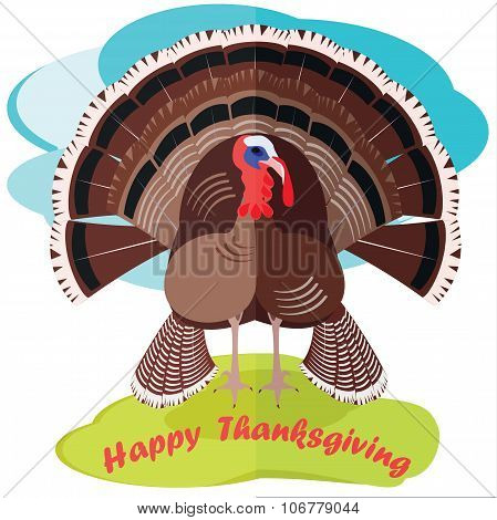 turkey bird for happy Thanksgiving celebration, with a loose tail, poultry agriculture, chicken farm