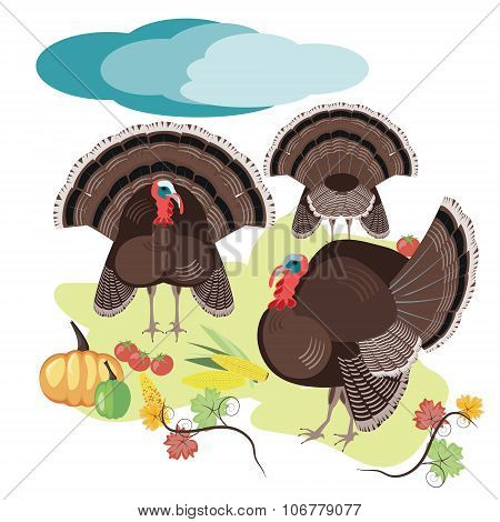 Turkey hen in the meadow poster, poultry farm, fruit, vegetables, vector illustration