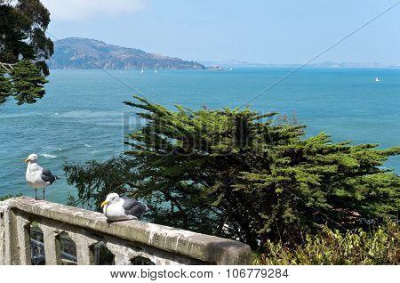 Seagulls On Balustrade At Alcatraz