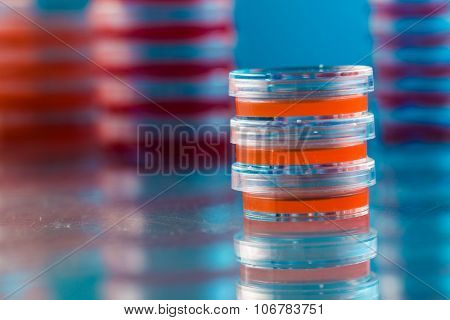 Petri dish with bacteria colonies