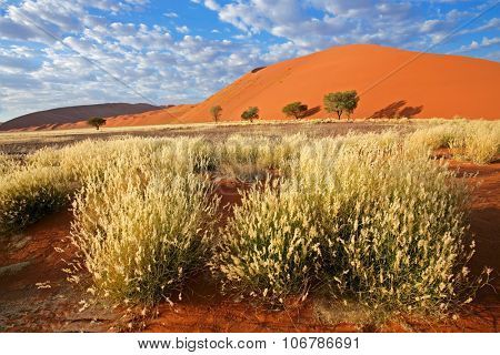 Landscape with desert grasses, sand dune and sky with clouds, Sossusvlei, Namibia, southern Africa