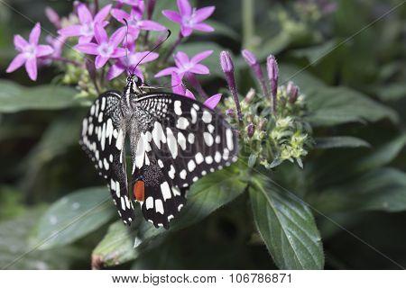 Butterfly On A Purple Plant