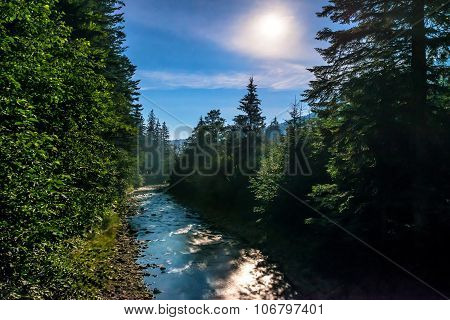 River In The Night Forest