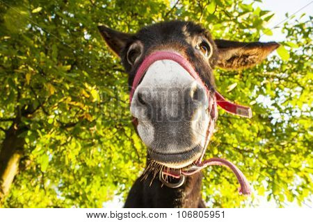 Funny Donkey Stares At The Camera