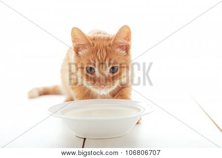 Cute ginger kitten drinking milk on the floor isolated on white background