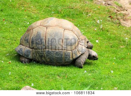 The Big Turtle On The Green Grass