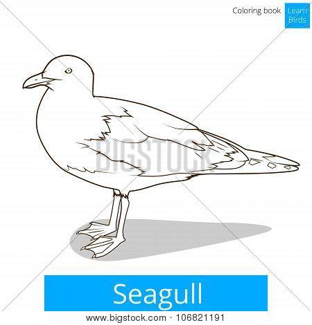 Seagull learn birds coloring book vector
