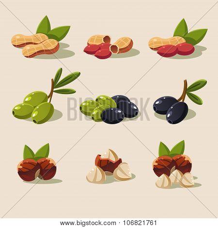 Olives and Nuts Vector Illustration Modern Design