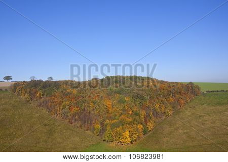 Colorful Autumn Woodland