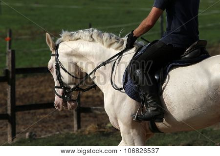 Purebred Gray Horse Galloping With Unknown Rider