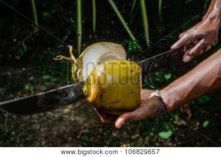 Man Cutting A Coconut In Half