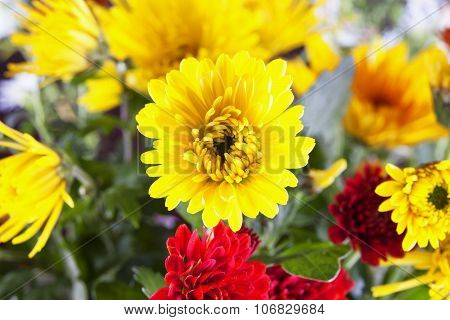 Yellow Crysantemum In A Bunch