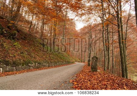 Paceful road through the colorful autumn forest in the Italian Alps