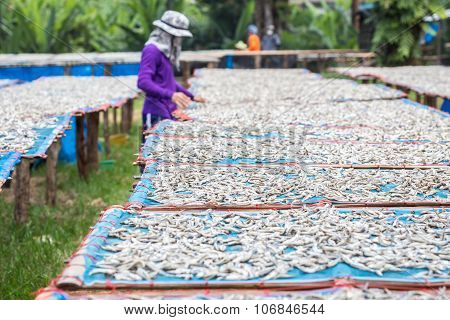 Thai People Are Turning To Fish That Are Dried In The Sun.