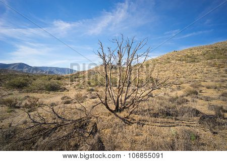 Charred Tree In Mojave Desert
