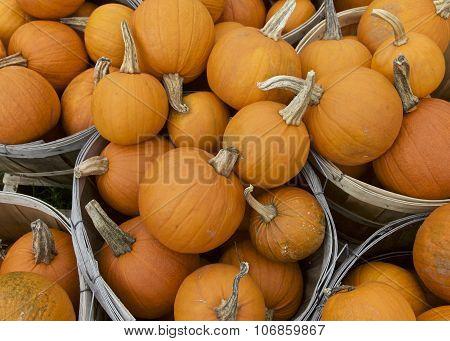 Pumpkin, Fall