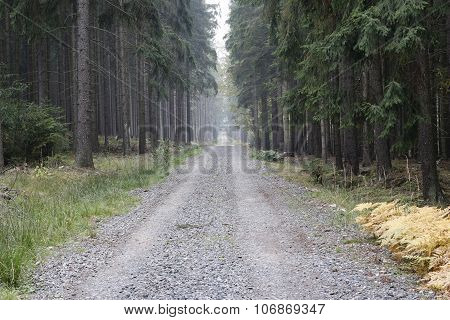 Forest Road In The Coniferous Woodland