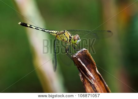 Close up of yellow dragonfly on flower grass.