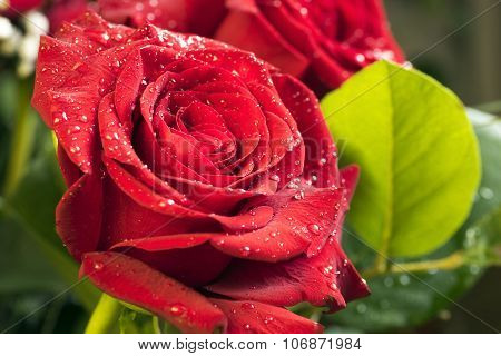Red Rose With Water Drops Closeup