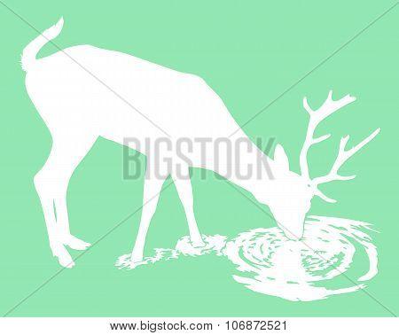 Deer drinks water