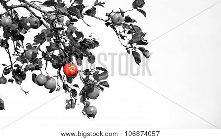 One Standing Out From The Crowd Concept Colored Apple Among Grey Ones