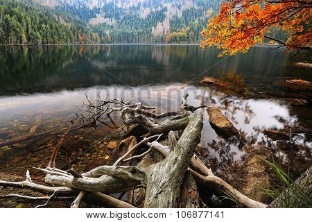 Glacial Black Lake Surrounded By The Forest In South Bohemia