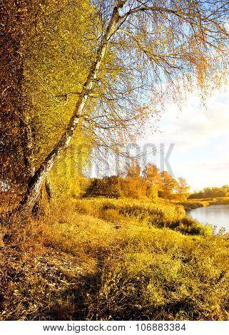 Vibrant yellow autumn
