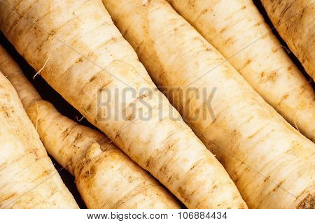 Pile Of Parsley Root