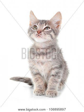 Cute little grey kitten, isolated on white