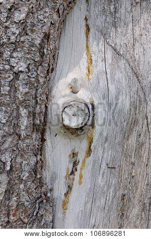 Contrasting Tree Bark